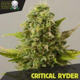 CRITICAL RAIDER