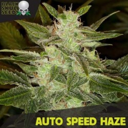 AUTO SPEED HAZE