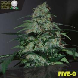 FIVE-0 BLACK SKULL