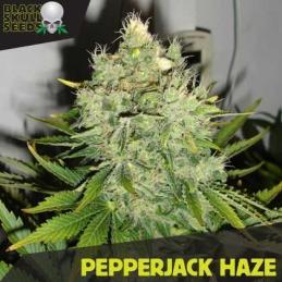PEPPER JACK HAZE BLACK SKULL