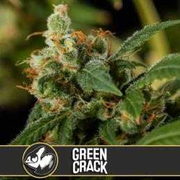 GREEN CRACK BLIMBURN