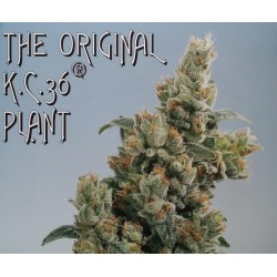 Outlet - GROW - BOOSTER 500 ML * JUNGLE BOOST - Imagen 1