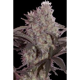 CAMISETA 420 - DOBLE IMPRESION - HAZE - M (BLANCA) * 420 BACKYARD - Imagen 1