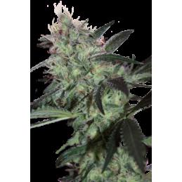 CAMISETA 420 - DOBLE IMPRESION - ITS ALWAYS 420 - M (NEGRA) * 420 BACKYARD - Imagen 1