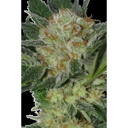 CAMISETA 420 - DOBLE IMPRESION - ITS ALWAYS 420 - XL (NEGRA) * 420 BACKYARD - Imagen 1