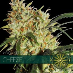 CHEESE VISION SEEDS