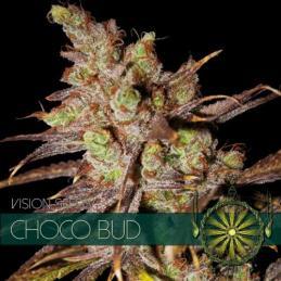 Choco Bud VISION SEEDS
