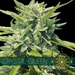 CRYSTAL QUEEN VISION SEEDS
