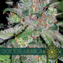 Doctor Jamaica VISION SEEDS