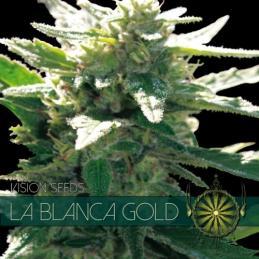 La Blanca Gold VISION SEEDS