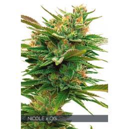 Nicole x OG