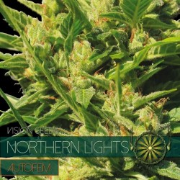 NORTHERN LIGHTS AUTO VISION SEEDS