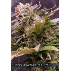 Vision Caramello Auto VISION SEEDS