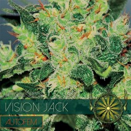 Vision Jack - Auto