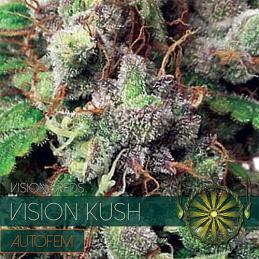 Vision Kush - Auto VISION SEEDS