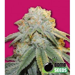 BUBBLE BOOM BOMB SEEDS