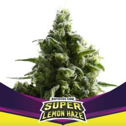 SLH – Super Lemon Haze