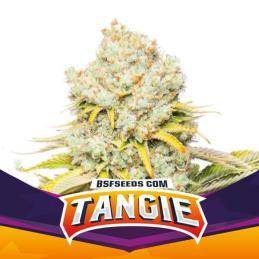 Tangie