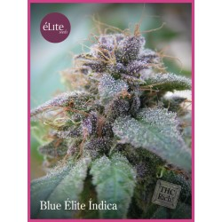 Blue Élite Índica ELITE SEEDS