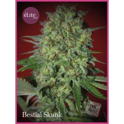 Bestial Skunk ELITE SEEDS
