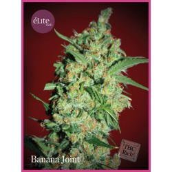 Banana Joint ELITE SEEDS