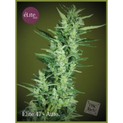 Élite 47 - Autofloreciente ELITE SEEDS