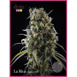 La Rica - Clásica CBD ELITE SEEDS