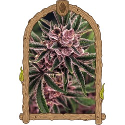 TROPICAL FUEL exotic seeds