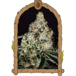 ZKITTALICIOUS exotic seeds