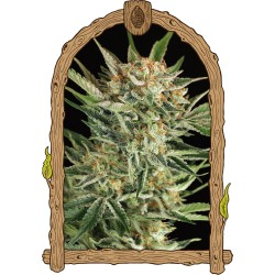 RUSSIAN AUTOMATIC EXOTIC SEEDS