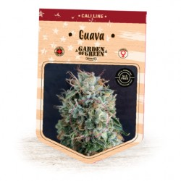 GUAVA EXPERT SEEDS
