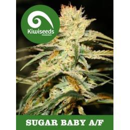 Auto Sugar Baby KIWI SEEDS
