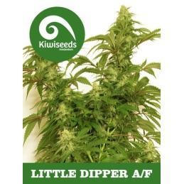 Auto Little Dipper KIWI SEEDS