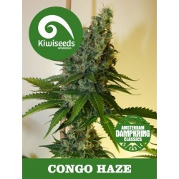 Dampkring - Congo Haze