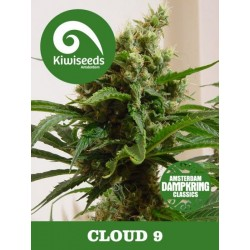 Dampkring - Cloud 9 KIWI SEEDS