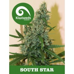 South Star KIWI SEEDS