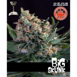 PURE SEEDS BIG SKUNK PURE SEEDS