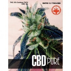 PURE SEEDS CBD PURE PURE SEEDS