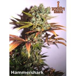 HAMMERSHARK RESIN SEEDS