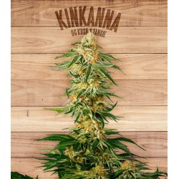 KINKANNA THE PLANT ORGANIC