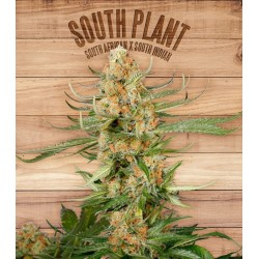 SOUTH PLANT THE PLANT ORGANIC