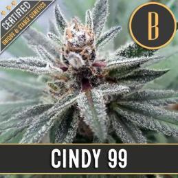 CINDY'S 99 Blimburn