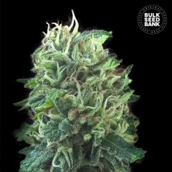 GREEN COOKIES SCOUT