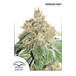AUTO COLORADO COOKIES DUTCH PASSION