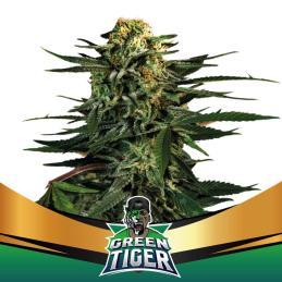 Green Tiger BSF SEEDS