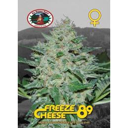 FREEZE CHEESE 89 – Big Buddha Seeds - Sativagrowshop.com