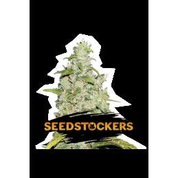 Amnesia SeedStockers - Sativagrowshop.com