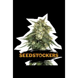 BCN Critical XXL Auto SeedStockers - Sativagrowshop.com