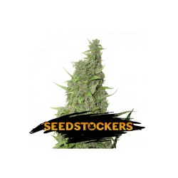 BCN Power Plant SeedStockers - Sativagrowshop.com