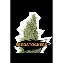 BCN Power Plant Auto SeedStockers - Sativagrowshop.com